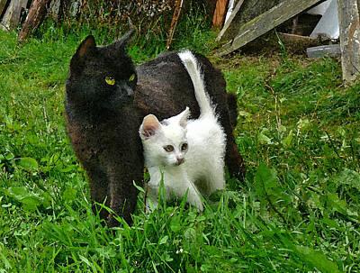 Black Cat Defends His White Kitten Art Print by Aleksandr Volkov