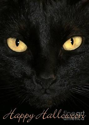 Photograph - Black Cat Halloween Card by Sabrina L Ryan