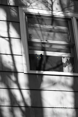 Photograph - Black  Cat On A Shadowy Sill by Margie Avellino