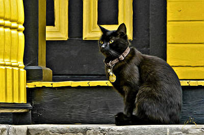 Smithfield Photograph - Black Cat Yellow Trim by Williams-Cairns Photography LLC