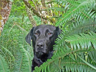 Black Dog In The Ferns Art Print