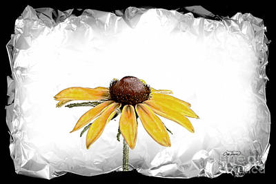 Photograph - Black Eyed Susan II by Cris Hayes