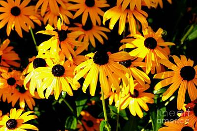 Black Eyed Susans Art Print by Theresa Willingham