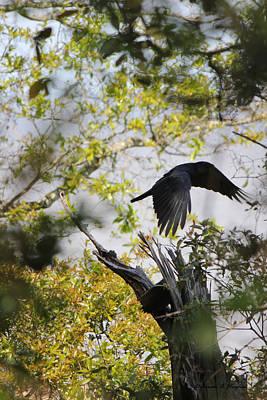 Photograph - Black Hawk by Deborah Hughes