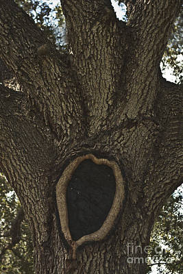 Photograph - Black Heart by Kim Henderson
