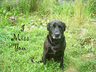 Photograph - Black Lab Miss You by Aimee L Maher Photography and Art Visit ALMGallerydotcom