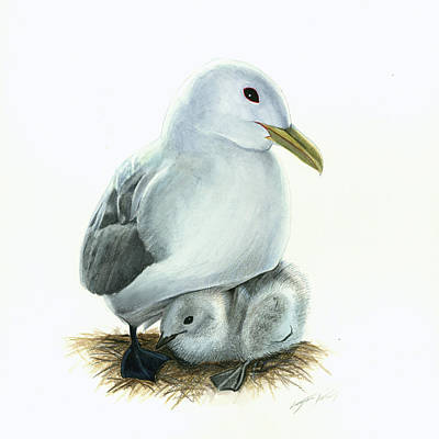 Watercolor Painting - Black-legged Kittiwake Parent And Chick by Logan Parsons