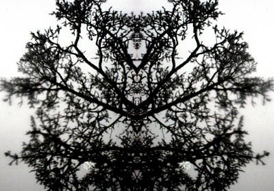 Art Print featuring the photograph Black Mold by Amy Sorrell