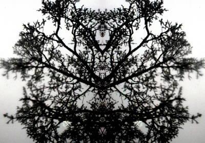 Black Mold Art Print by Amy Sorrell