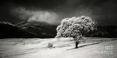 Photograph - Black Oak by Alexander Kunz