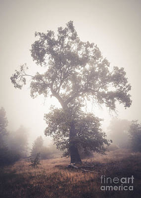 Photograph - Black Oak In Fog by Alexander Kunz
