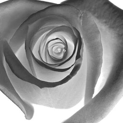 Of Roses And Love Wall Art - Photograph - Black Petals by Glennis Siverson