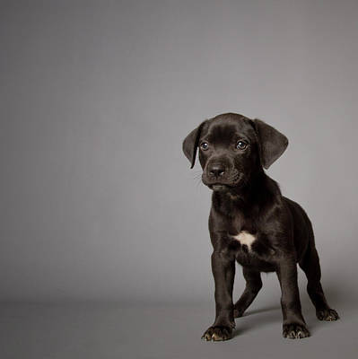 One Dog Photograph - Black Puppy by Square Dog Photography