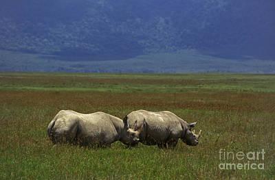 Photograph - Black Rhinos - Ngorongoro Crater Tanzania by Craig Lovell