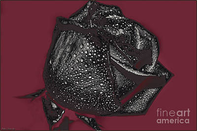 Photograph - Black Rose - Digital Effect by Debbie Portwood