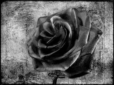 Floral Arrangement Digital Art - Black Rose Eternal  Bw by David Dehner