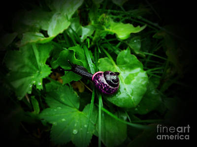 Digital Art - Black Snail On Foliage by Lisa Redfern