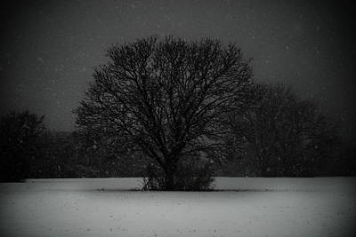 Black Snow Tree Art Print by Sonja Quintero