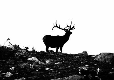 Photograph - Black Stag by Kevin Munro
