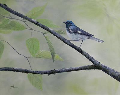 Black-throated Blue Warbler Original by Dee Carpenter