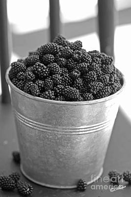 Photograph - Blackberries In Bucket by Alana Ranney