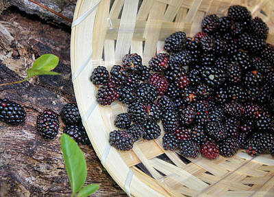 Photograph - Blackberries by Kristin Elmquist