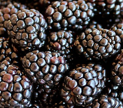 Photograph - Blackberries by Kume Bryant
