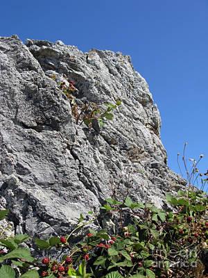 Photograph - Blackberry On The Rock by Ausra Huntington nee Paulauskaite