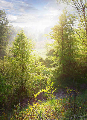 Photograph - Blackberry Patch Morning by Francesa Miller