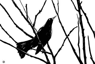 Branch Wall Art - Drawing - Blackbird by Giuseppe Cristiano