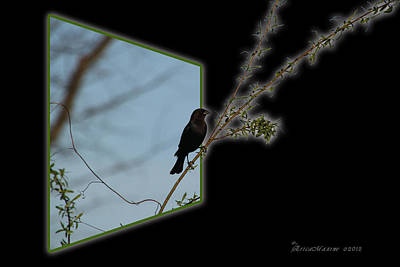 Photograph - Blackbird In The Willow by Ericamaxine Price