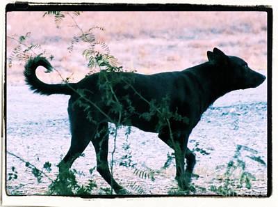 Blackdog Art Print