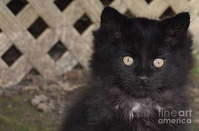 Photograph - Blackie Bartholomew Alley Cat by Reb Frost
