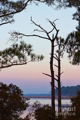 Blackwater Pines Art Print