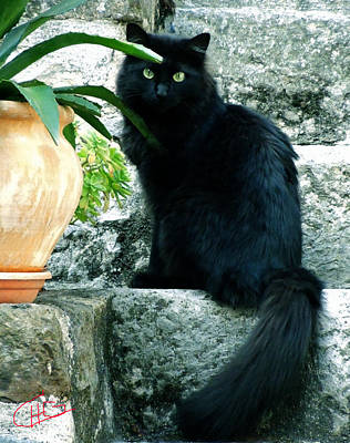 Staris Photograph - Blacky Cat by Colette V Hera  Guggenheim