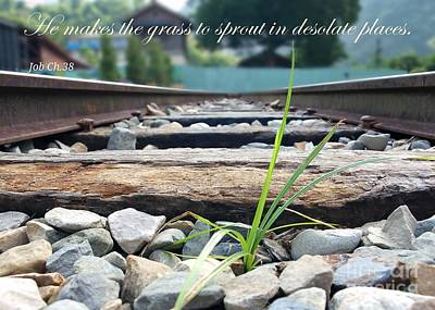 Photograph - Blade Of Grass On Railroad Tracks by Yali Shi