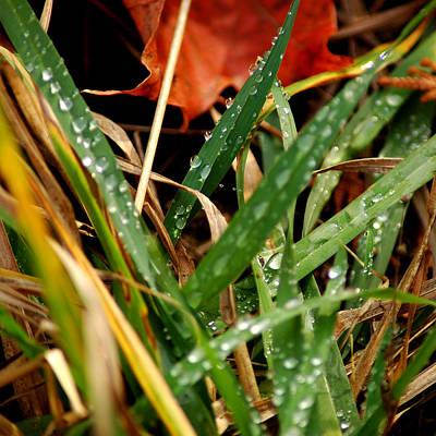 Photograph - Blades Of Dew by LeeAnn McLaneGoetz McLaneGoetzStudioLLCcom