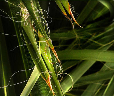Photograph - Blades Of Grass by Marilyn Marchant