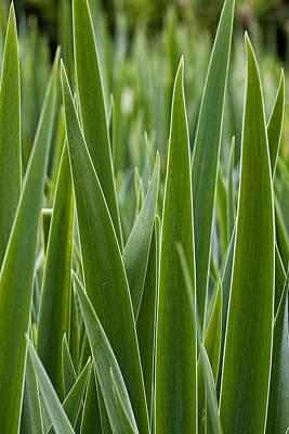 Photograph - Blades by Sara Hudock
