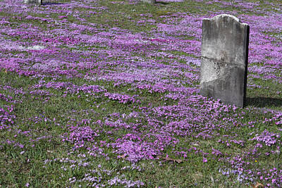 Final Resting Place Photograph - Blank Colonial Tombstone Amidst Graveyard Phlox by John Stephens