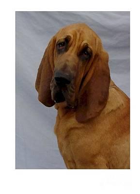 Blood Hound Digital Art - Bloodhound 269 by Larry Matthews