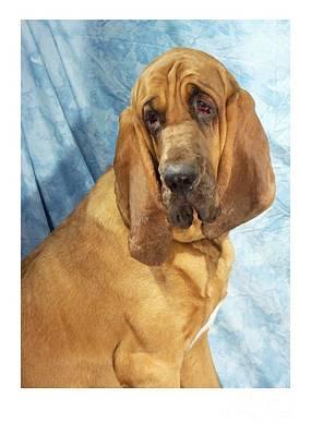 Blood Hound Digital Art - Bloodhound 283 by Larry Matthews