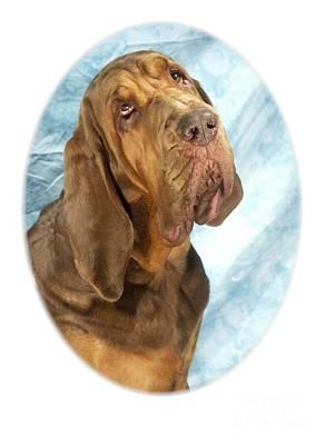 Blood Hound Digital Art - Bloodhound 371 by Larry Matthews