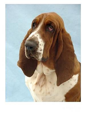 Blood Hound Digital Art - Bloodhound 658 by Larry Matthews