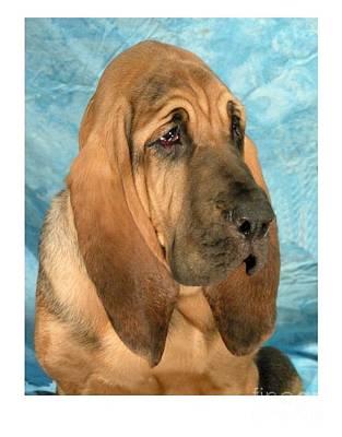 Blood Hound Digital Art - Bloodhound 927 by Larry Matthews