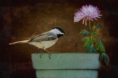 Photograph - Bloom N Curiosity by Robin-Lee Vieira