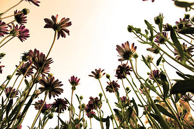 Magenta Photograph - Blooming Above 2 by Sumit Mehndiratta