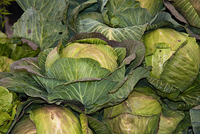 Photograph - Blooming Cabbage Heads by Dina Calvarese
