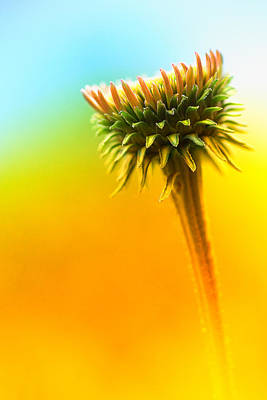 Blooming Flower Art Print by Susan Stone