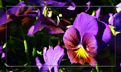 Photograph - Blooming For Spring by Robert Clayton
